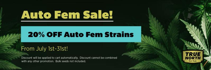 Auto Feminized Seeds