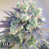 Wedding Cake Feminized Seeds - ELITE STRAIN